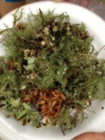 Lichen addiction continues