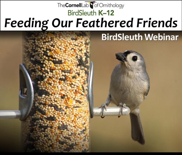 Feeding Birds Webinar : Cornell Lab of Ornithology