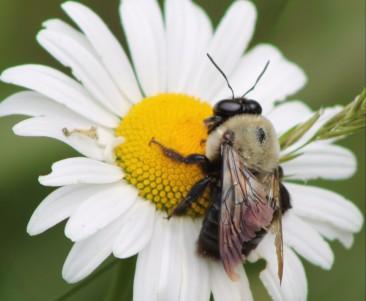 Bee - Edited
