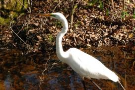 Egret (2)